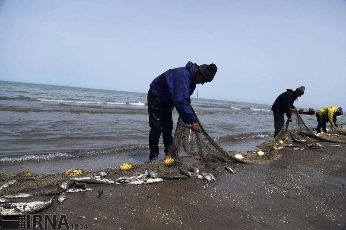 خبرنگاران کرونا ، صید ماهیان استخوانی را در مازندران نصف کرد