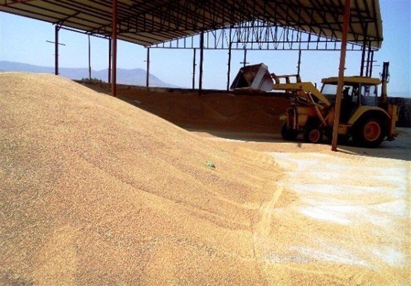 خبرنگاران بیش از 150 هزار تن گندم از کشاورزان قزوینی خریداری شد