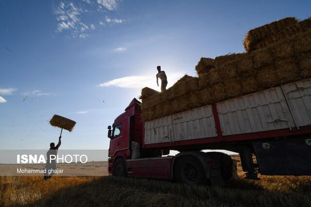 خرید تضمینی 276 هزار و 611 تن گندم از کشاورزان لرستان
