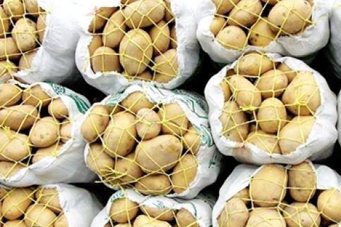 11 میلیارد سیبزمینی احتکار شده در دلفان